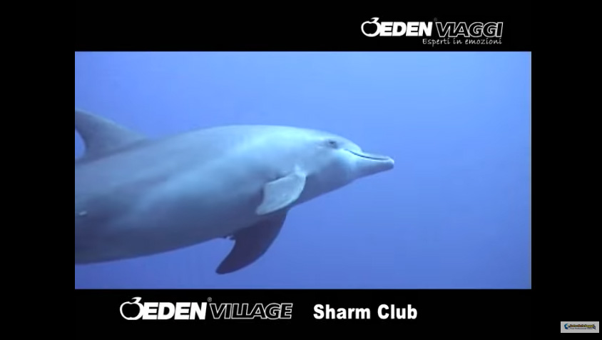 Eden Village Sharm Club,Sharm El Sheikh